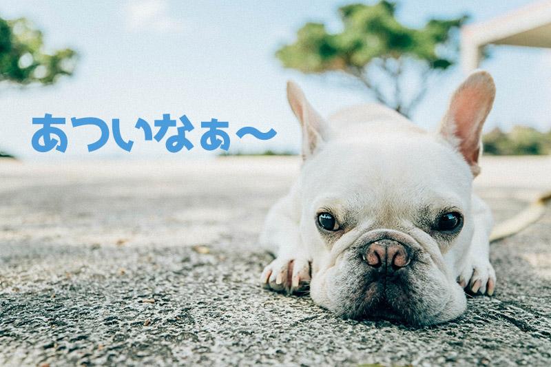 暑がっている犬