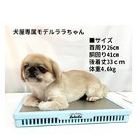 エアコンなしの犬の暑さ対策グッズ 09