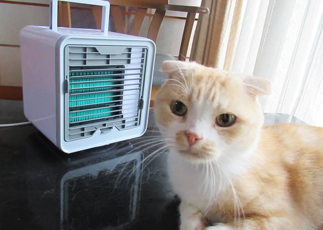 ここひえ ペットの暑さ対策